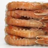 Deep frozen prawns, close-up Stock Photos