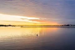 Deep golden sunrise over calm lake, silhouette of bird swimming Royalty Free Stock Photos