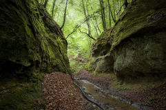 Deep gorge with green moss and trees Stock Images