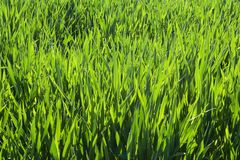 Deep grass Stock Photos
