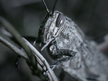 Deep grasshopper phobia Stock Photo