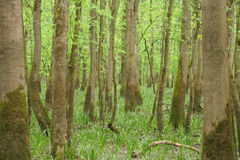 Deep green forest Royalty Free Stock Photos