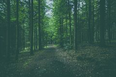 Deep green forest Royalty Free Stock Photo