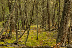 Deep Green Forest Royalty Free Stock Photography