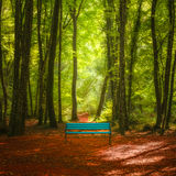 Deep green forest scenery and blue bench Stock Image