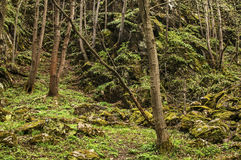 Deep green forest in springtime sunless day. Dank deep mountain green forest in springtime sunless day as natural background stock image