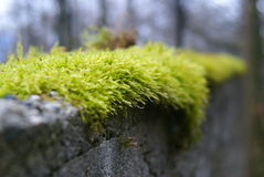 Deep green and humid mosses Royalty Free Stock Photo
