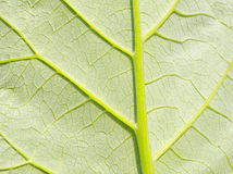 Deep green leaf. Element of design. Deep green leaf. Element of the design royalty free stock photos
