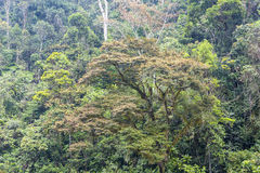 Deep green rainforest Royalty Free Stock Image