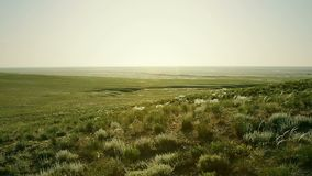 Green steppe at sunny day. Deep green steppe at sunny day stock video footage
