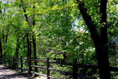 Deep Green in Summer. In trees by a fence Stock Images