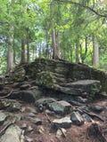 Deep hidden rocky forest. Deep hidden forest view sunny trees Stock Photography