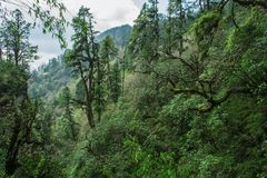 Deep high forest in the mountain. Deep green forest on the mountain Royalty Free Stock Photo