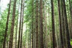 Deep highland forest at Carpathian mountains. Ukraine destinatio Stock Image