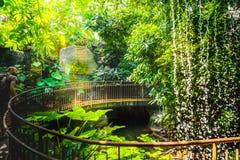 Deep jungle walk waterfall adventurer man explorer artificial railing royalty free stock images