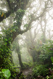 Deep in lush foggy rainforest Royalty Free Stock Image