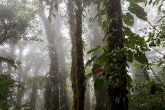 Deep in lush foggy rainforest. Lush foggy rainforest La Fortuna Costa Rica Stock Images