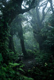Deep in lush rainforest Royalty Free Stock Photography