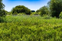 Marshland meadows poster royalty free stock photo