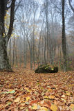 Deep misty forest. Autumn forest with fog among trees and a lot of fallen leaves Stock Photography