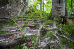 Deep moss fores with plants Stock Image