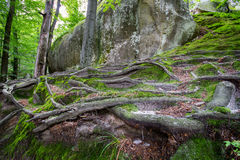 Deep moss fores with plants Stock Photos
