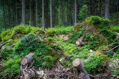 Deep moss fores with plants Royalty Free Stock Photography