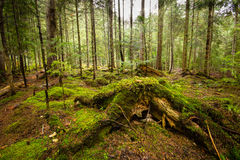 Deep moss fores with plants Royalty Free Stock Photo