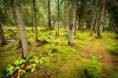 Deep moss fores with plants Stock Photo
