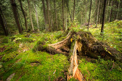 Deep moss fores with plants Royalty Free Stock Photos
