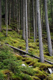 Deep mossy forrest Royalty Free Stock Images