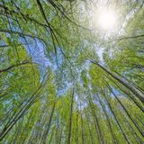 Deep mountain forest. Stock Images