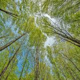 Deep mountain forest. Royalty Free Stock Images
