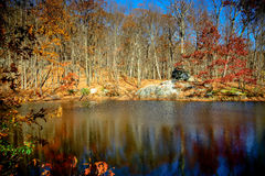 Deep natural pool , black water during Autumn Stock Photography