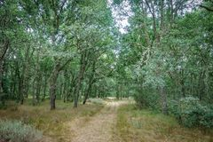 Over oak tree forest track Stock Photos