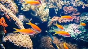 Deep Ocean Colorful Fish Swimming In Aquarium. Deep Ocean Colorful Fish Swimming In Large Aquarium stock photography