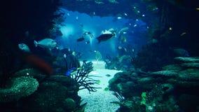 Deep Ocean Colorful Fish Swimming In Aquarium. Deep Ocean Colorful Fish Swimming In Large Aquarium stock photos