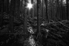 Deep old forest Royalty Free Stock Photos