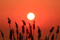Deep orange sun and sky Royalty Free Stock Photography