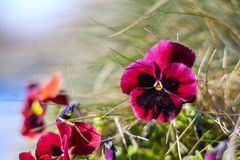 Deep pink flower. Pink flower and grass background stock images