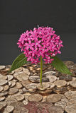 Deep pink flowers & pile of gold dollar coins. Stock Images