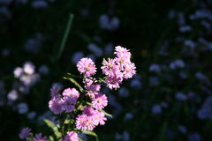 Deep Pink flowers. / Pink , purple flowers in summer royalty free stock photos