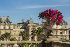 Deep pink petunias in stone urn in Jardin de Luxembourg, Paris, France. Stone urn or vase with deep pink petunias in front of the Senate (Palais de Luxembourg) royalty free stock photography