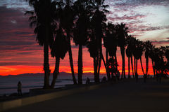 Deep purple and orange sunset with palm trees looking towards Anacapa Island, Ventura, California, USA Stock Photos