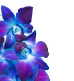 Deep purple orchid Stock Photography