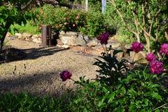 Deep purple peony stone garden. With shadows stock photography