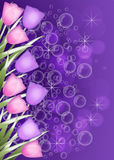 Deep purple Tulip border Royalty Free Stock Image
