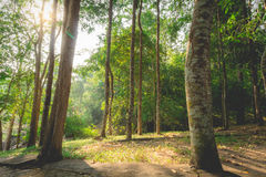 Deep rain forest Royalty Free Stock Photography