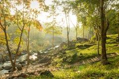 Deep rain forest Stock Photos