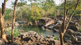 Deep rain forest Stock Photo